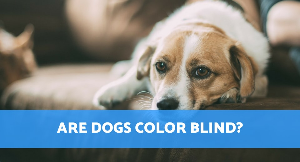 are dogs color blind