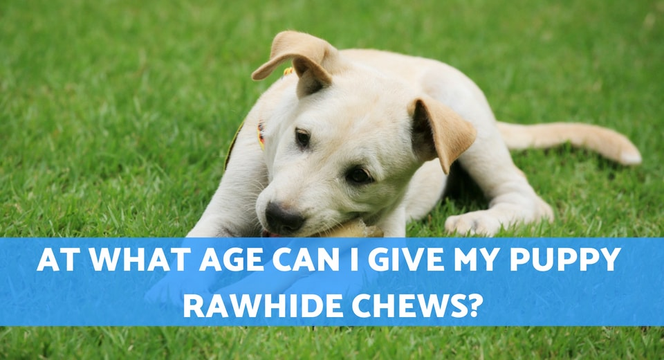 what age can puppies have rawhide