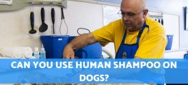 Can You Use Human Shampoo On Dogs?