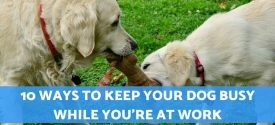 10 Ways to Keep Your Dog Busy While You're At Work