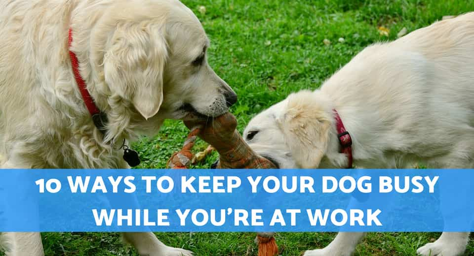 How To Keep Dog Entertained While At Work