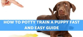 How to Potty Train a Puppy Fast and Easy Guide