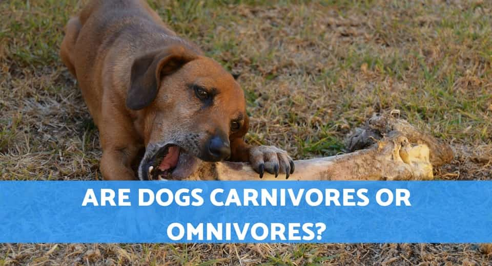 are dogs carnivores
