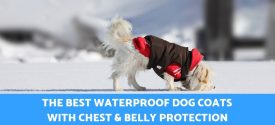 Top 5 Best Waterproof Dog Coats With Chest and Belly Protection