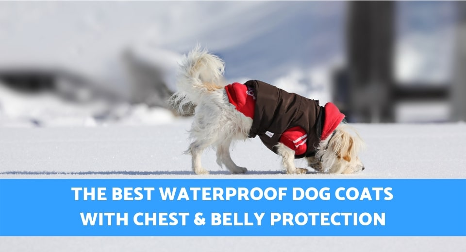 waterproof dog coat with chest and belly protection
