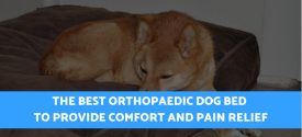 Top 6 Best Orthopaedic/Orthopedic Dog Beds For Older Dogs, Arthritis & Joint Pain