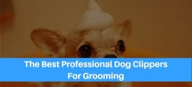 The 10 Best Professional Dog Clippers To Keep Your Pooch Looking Great