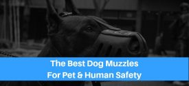 The 10 Best Dog Muzzles For Biting, Barking or Nervous Dogs