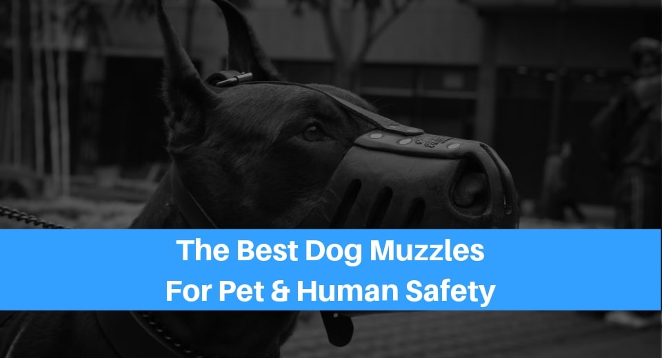 best dog muzzle for biting dogs