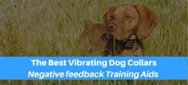 The 10 Best Vibrating Dog Collars For Negative Feedback Training