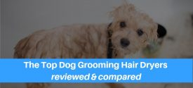 12 Of The Very Best Hair Dryers For Dog Grooming On The Market